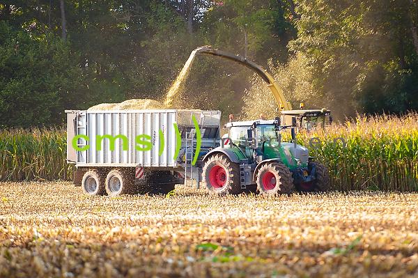 Stockfotos: Mais - Ernte in Bayern, Agrarwirtschaft - Futtermais, Mais, Maisernte © CMS-MEDIEN.EU